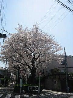 3月30日呑川緑道