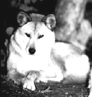 イヌの遺伝子-(1)イヌ科イヌ...