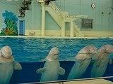 白イルカ整列