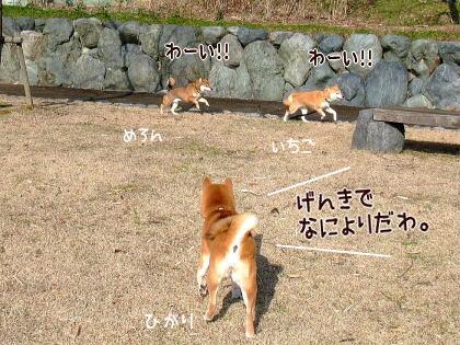 柴犬ひかりといちご のんびり日記-mimamorumama