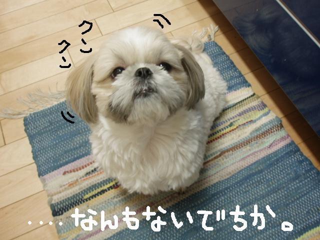 シーズー犬・むっくとモモの日常♪-なんもないでちか。。