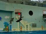 イルカ大ジャンプ