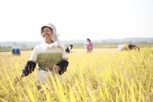 『六ヶ所村ラプソディー』~オフィシャルブログ-天手子米収穫祭やすこさん