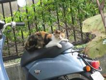 Cat on the bike