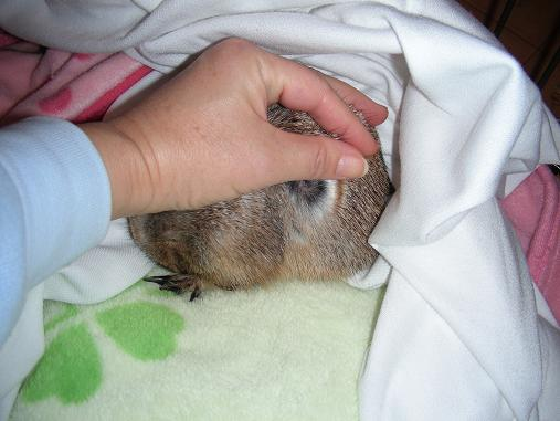 愛しプレ'sのまったり生活-ヌクヌクで寝てました(*^^*)