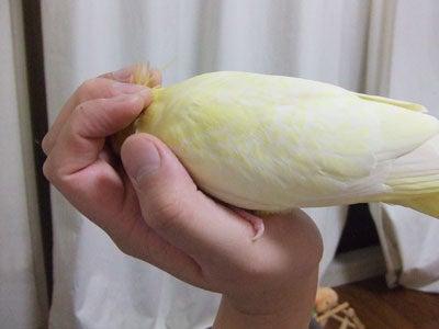 たんぽぽ022807