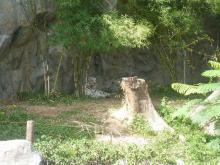 チェンマイ・ランプーン20代で隠居生活-白いトラ
