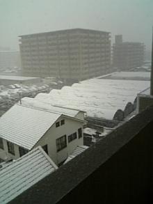 ねぎっとろ-積雪