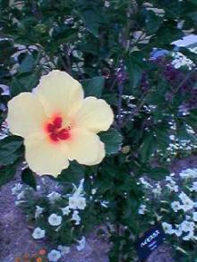 かわゆい黄色