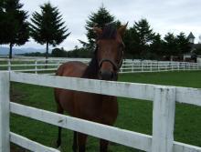 【競馬よ今宵も有難う】馬、牧場、富士山の写真と生活を懸けた競馬予想!-ザッツザプレンティ@レックススタッド