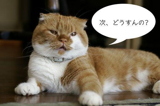 スコ猫くまきち日和+-アップ・変顔