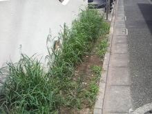 草刈り前-2