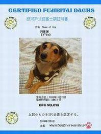 ぷりんpurinプリン♪-ダックス富士額クラブNo15