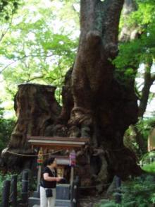2000年の大楠