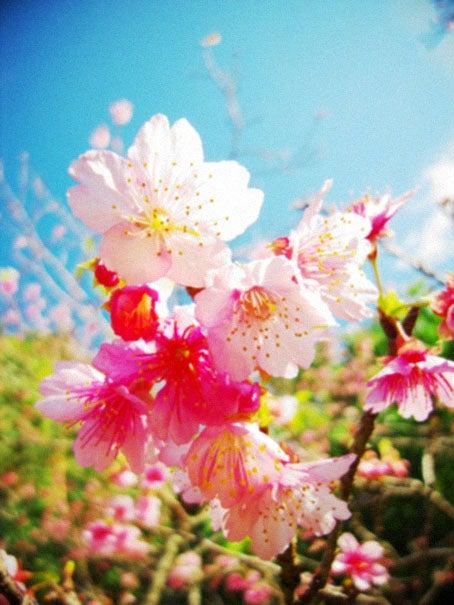 ケロケロの散歩道-sakura