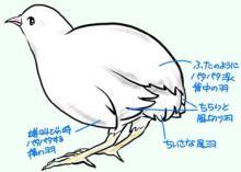 翼の収納(謎)