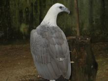 BIRD PARADISE-034