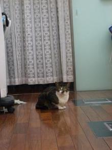 床屋さん猫-3