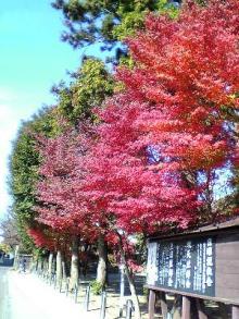 北鎌倉の紅葉