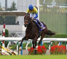 2005菊花賞