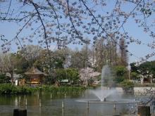 3月30日碑文谷公園