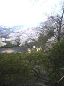 山の緑と桜の桃