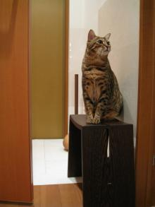 ネコ想う-スツール