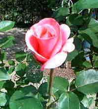 200505211430.jpg