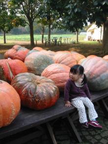 かぼちゃと!3
