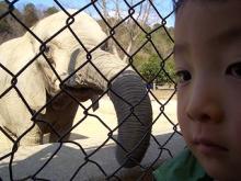至近距離の象