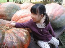 かぼちゃと!2