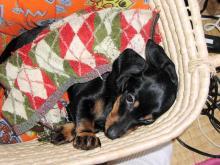 sleepy belle 1