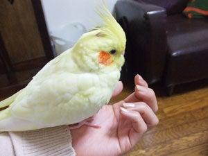 たんぽぽ012706