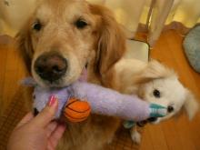 ママが、新しい おもちゃ!くれたーーっ