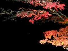 高台寺夜の紅葉