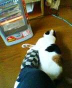 ストーブと猫暖房