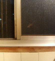 窓の隙間にヤモリ潜む。