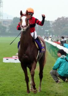 20081026菊花賞