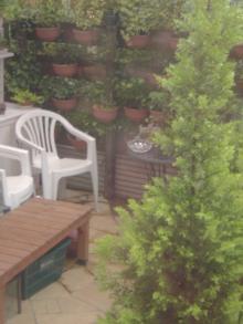 庭の梅雨!