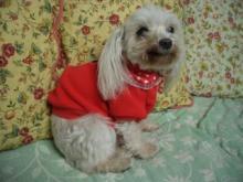 リリー(赤い服)