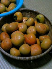 まだ青い渋柿