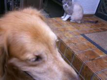 ラッキー、猫ちゃん大好きなのにねっ