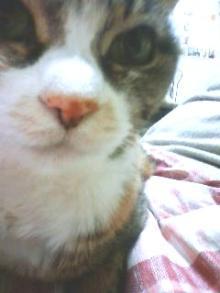 猫の手茶房-ふぐふぐ