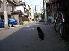 くろちゃん-87