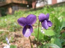 病院の庭で咲いていた花