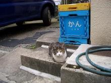 (オー)ミィちゃん-47