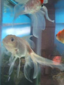 銀太・・・力抜きすぎ。アンタ観賞魚ですよ。