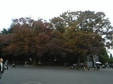 kouyou-2