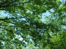代々木公園の空