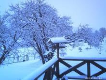 またしても雪